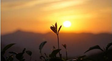 【反思融入教學】覺智與人生課程/華梵大學王惠雯老師